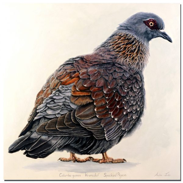 """Speckled pigeon"" Oil on canvas 1 x 1m"